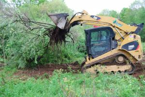 Machine uprooting invasive shrub.