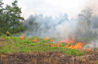 Prescribed burn at Albany Pine Bush