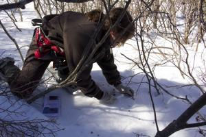 Biologist Kelly Boland collects rabbit fecal pellets