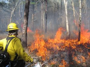 Controlled burns improve habitat by spurring new plant growth.