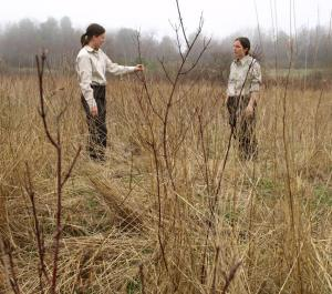 Conservationists inspect new shrub growth at Libby Field