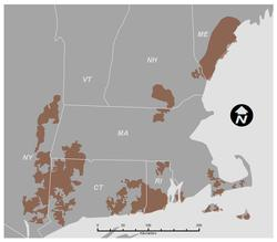 New England cottontail focus areas
