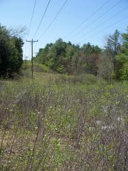 Powerlines can be excellent habitat corridors for New England cottontails