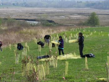 Volunteers plant shrubs for New England cottontails