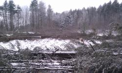clearcut logging on Bellamy River WMA