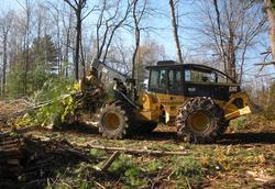 Skidder on habitat project for New England cottontails