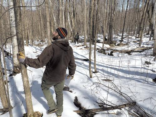Scientists and foresters oversee forest management