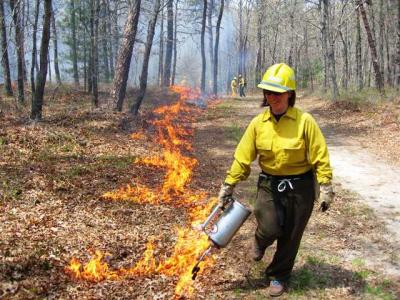 Prescribed burning in Massachusetts